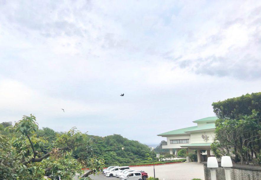 飛ぶツバメ